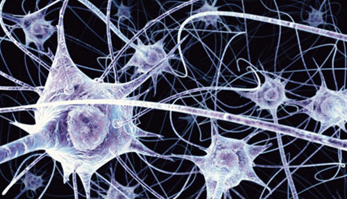 B0004164 Neurons in the brain - illustration